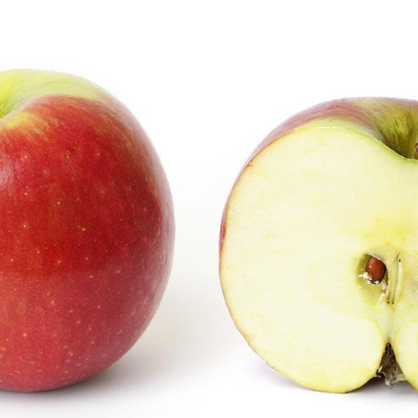 Melo da frutto antiche varietà