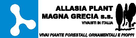 Allasia Plant Magna Grecia S.S.